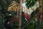 Sunset Palm Trunk