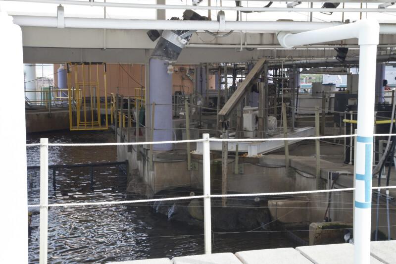 Surge Machine at the Florida Aquarium