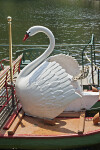 Swan Sculpture on a Swan Boat at the Boston Public Garden