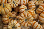Sweet Lightning Pumpkins