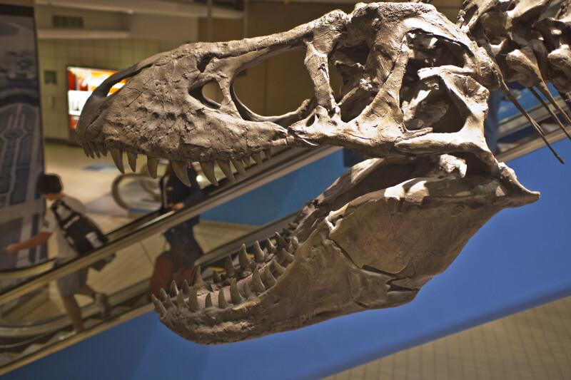 T. Rex Head Sculpture Near an Escalator at Pittsburgh International Airport