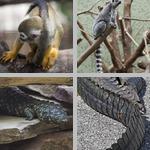 Tails photographs