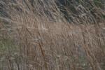 Tall, Brown Grass at Colt Creek State Park
