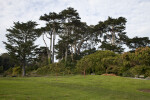 Tall Coniferous Trees behind Arbutus Trees