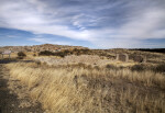 Tawny Grasses