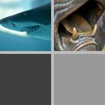 Teeth photographs