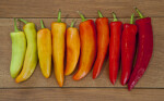 Ten Peppers Displaying a Color Spectrum