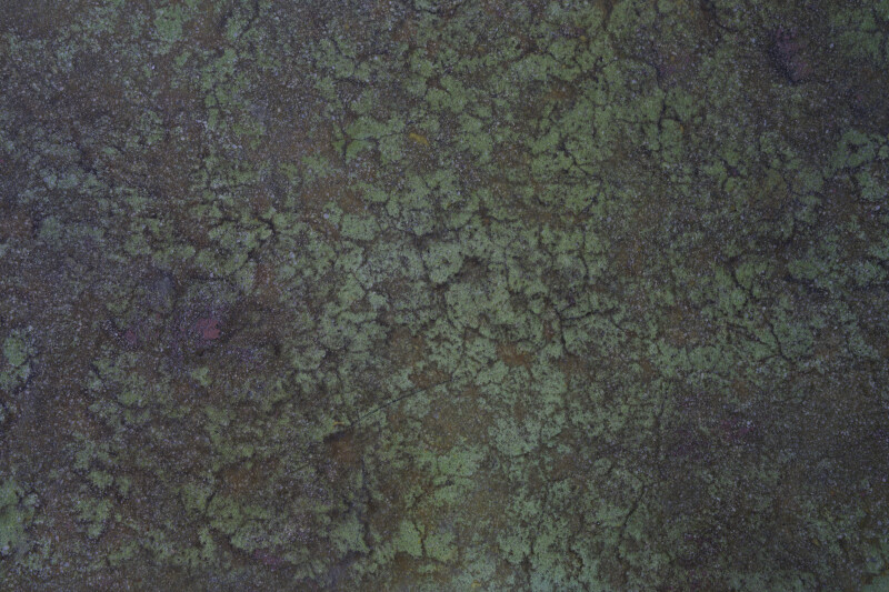 Textured Green Floor
