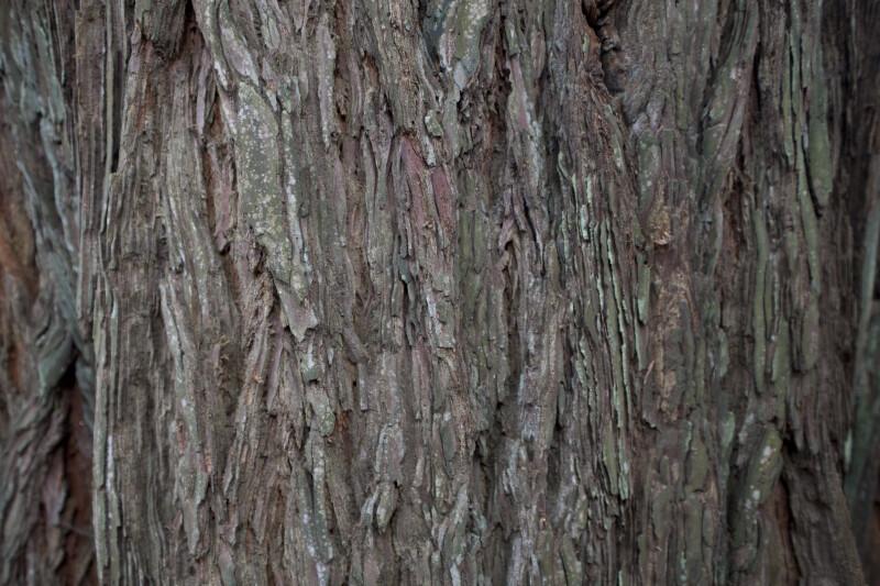 Textured Redwood Bark