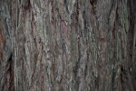 Textured Redwood Bark