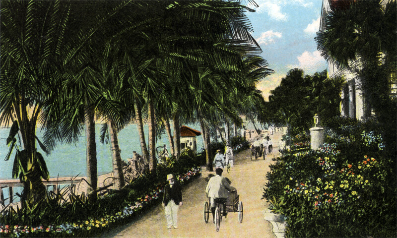 The Approach to the Hotel Palm Beach