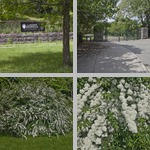 The Arnold Arboretum of Harvard University photographs