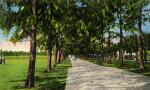 The Australian Pine Walk