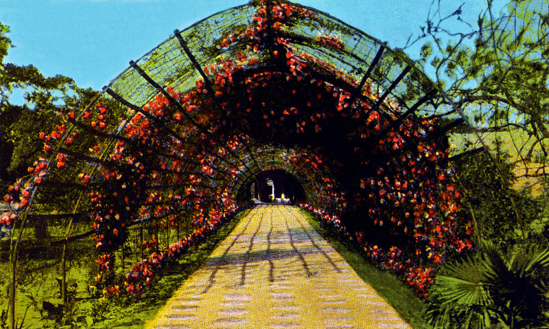 The Rose Arbor at Confederate Park