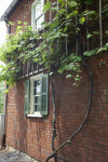 The Thick Vine Growing on the Baker House