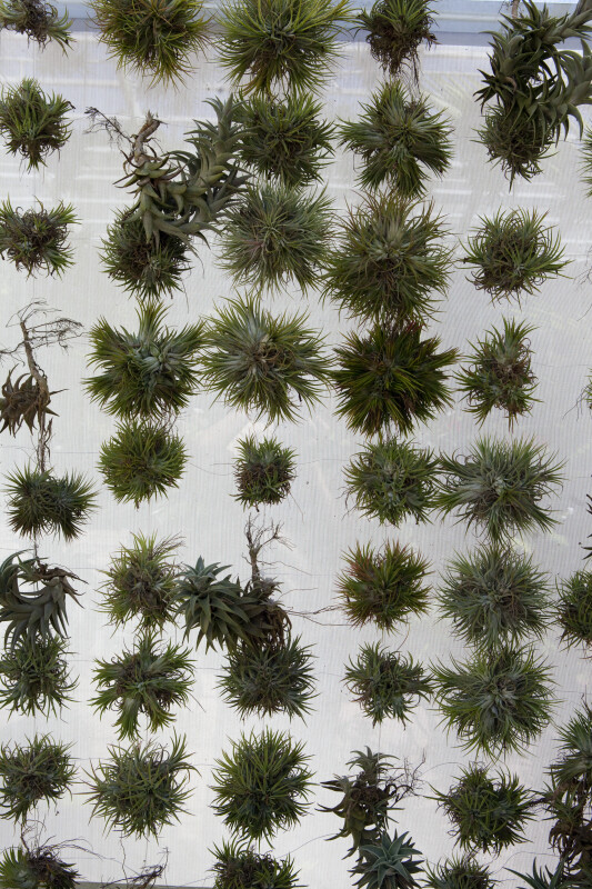 The Tillandsia Wall