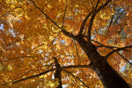 The View from beneath a Tree that is Turning Colors