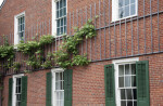 The Vine Growing on Frederick Rapp's House