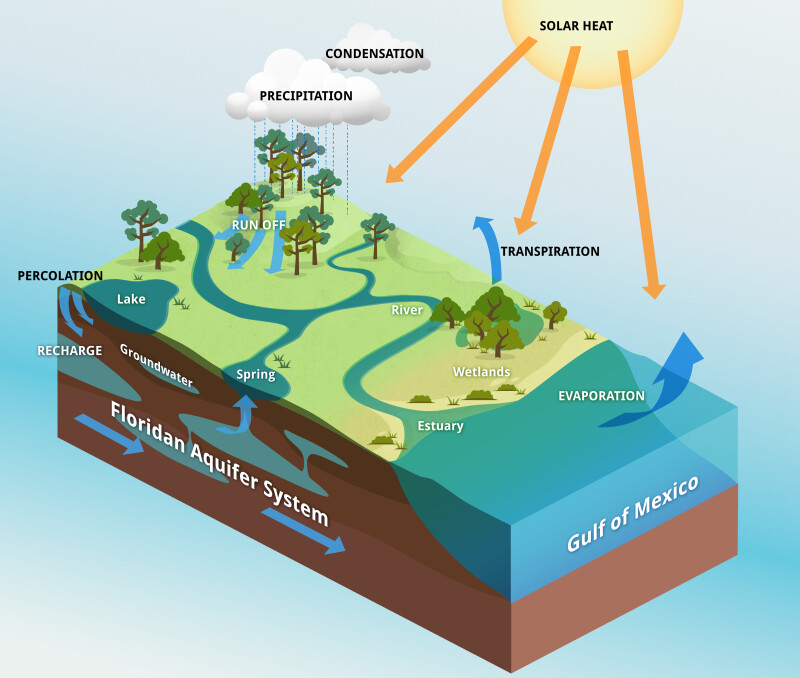 Florida Water Cycle Diagram - DIY Enthusiasts Wiring Diagrams •