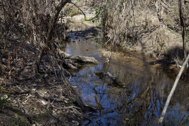 Thick Growth Around the Main Ditch at the Espada Acequia
