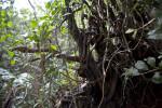Thin Branches at Mahogany Hammock of Everglades National Park