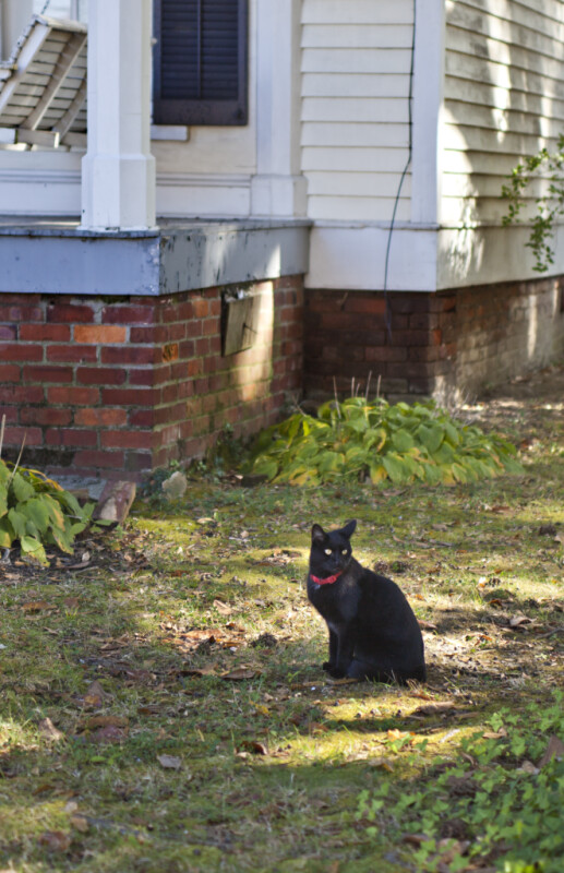 This Black Cat Has No Immediate Plans to Cross Anyone's Path