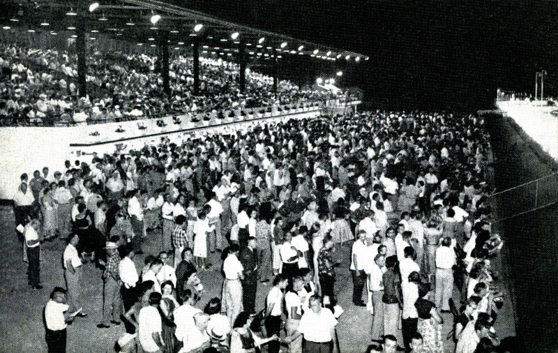 Thousands of Fans Gather to Watch the Greyhound Races