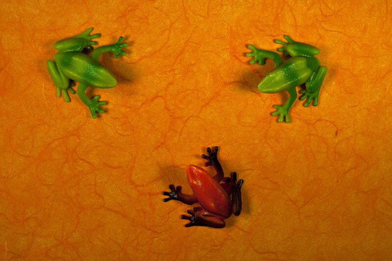 Three Plastic Frogs