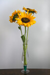 Three Sunflowers in a Glass Vase