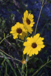 Three Yellow Flowers