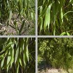 Timber Bamboo photographs