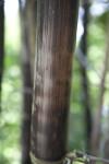 Timor Black Bamboo Detail