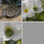 Toads photographs