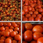 Tomatoes photographs