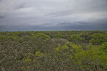 Tops of Trees and Dark Sky at Myakka River State Park