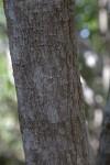 Torchwood Bark