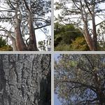 Torrey Pines photographs