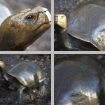 Tortoises photographs