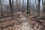 Trail at Boyce Park Leading Through Bare Trees and Some Fallen Logs