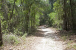 Trail at Chinsegut Wildlife and Environmental Area that Runs Through Various Trees and Shrubs