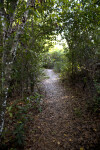 Trail Covered in Fallen Leaves Leading Through Trees at Tree Snail Hammock of Big Cypress National Preserve
