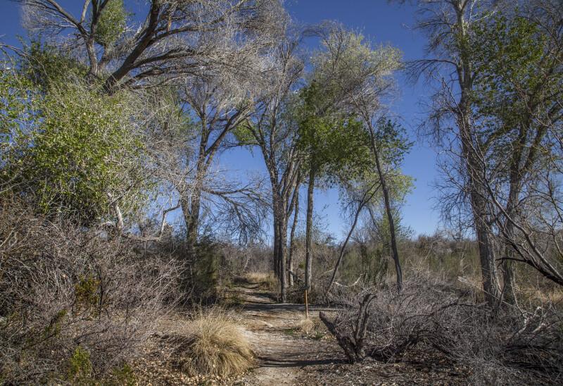 Trail of Desert Trees and Shrubs