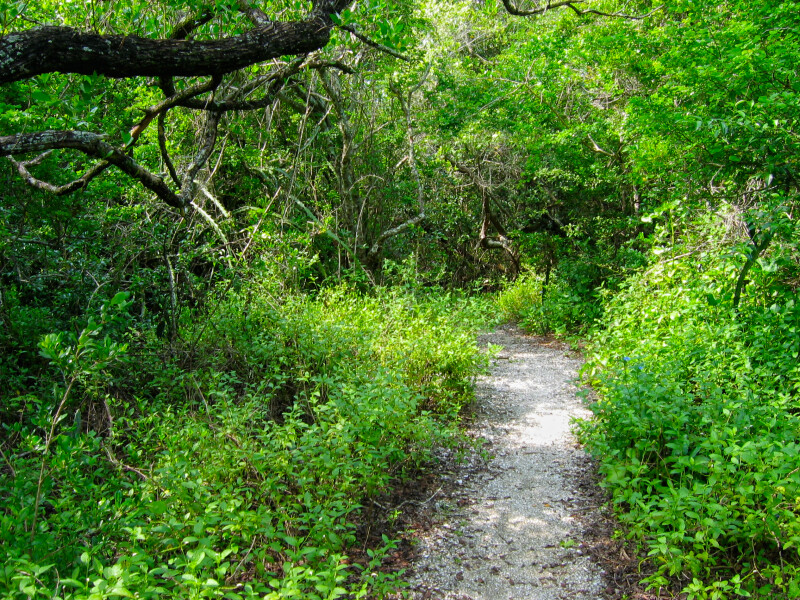 Trail on Mound Key