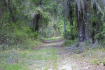 Trail Sparsely Covered in Grass Leading Through Trees and Shrubs