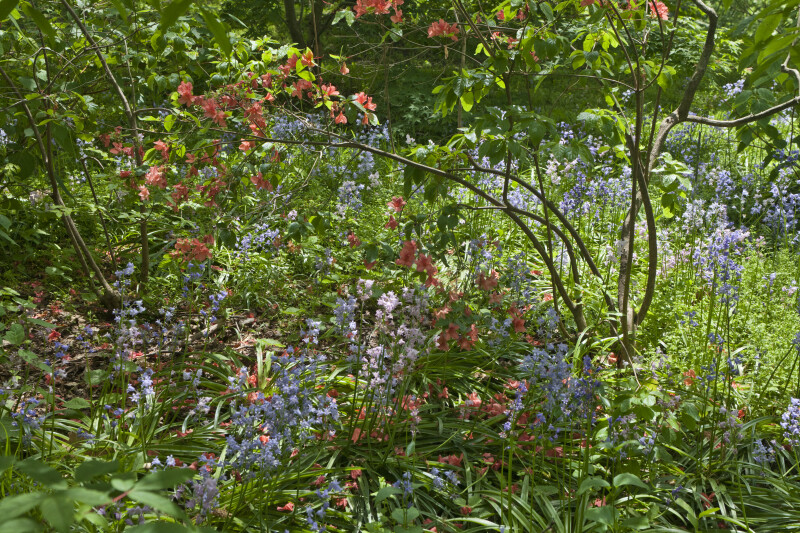 Tree Among Herbaceous Plants