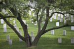 Tree and Headstones