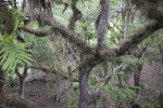 Tree at Myakka River State Park