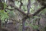 Tree at Myakka River State Park