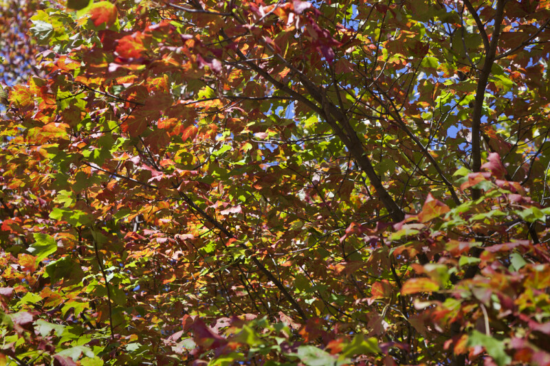 Tree Branches and Leaves During Fall