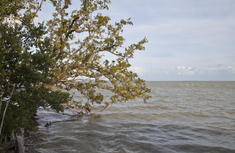 Tree Branches at the Florida Campgrounds of Everglades National Park